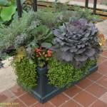 585-Chicago Botanical Gardens