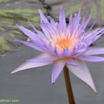 587-Chicago Botanical Gardens