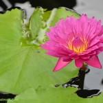 588-Chicago Botanical Gardens