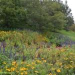 599-Chicago Botanical Gardens