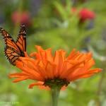 606-Chicago Botanical Gardens