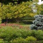 629-Chicago Botanical Gardens