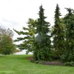 637-Chicago Botanical Gardens