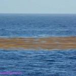 415-Toxic seaweed