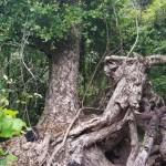 439-Punta Cana adventures